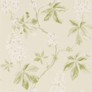 Sanderson Chestnut Tree Lemon-Lettuce 215707